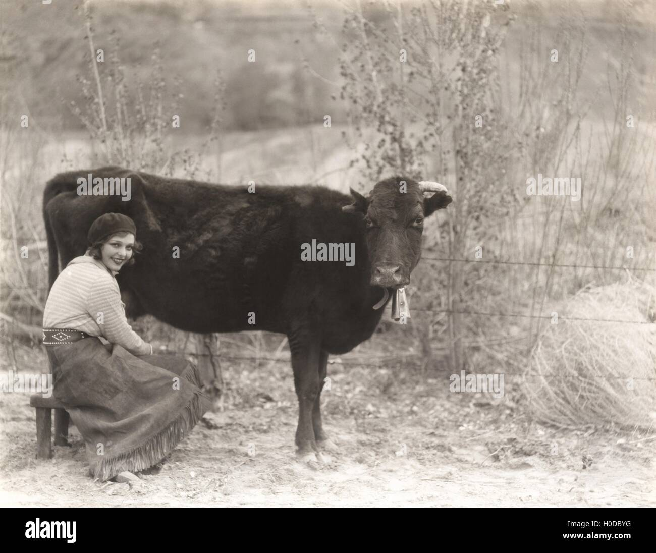 Woman sitting by cow - Stock Image