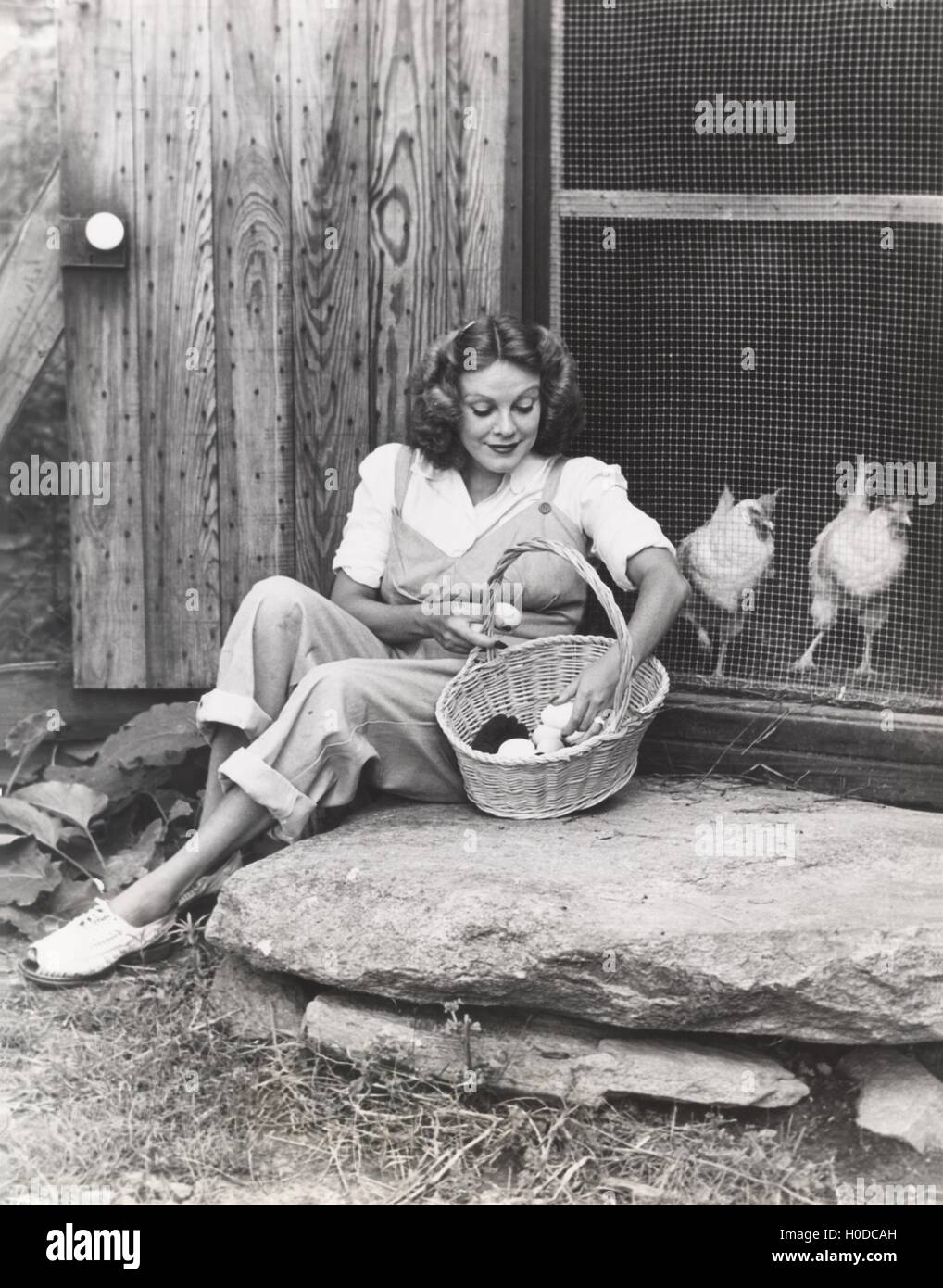 Woman collecting eggs from chickens - Stock Image