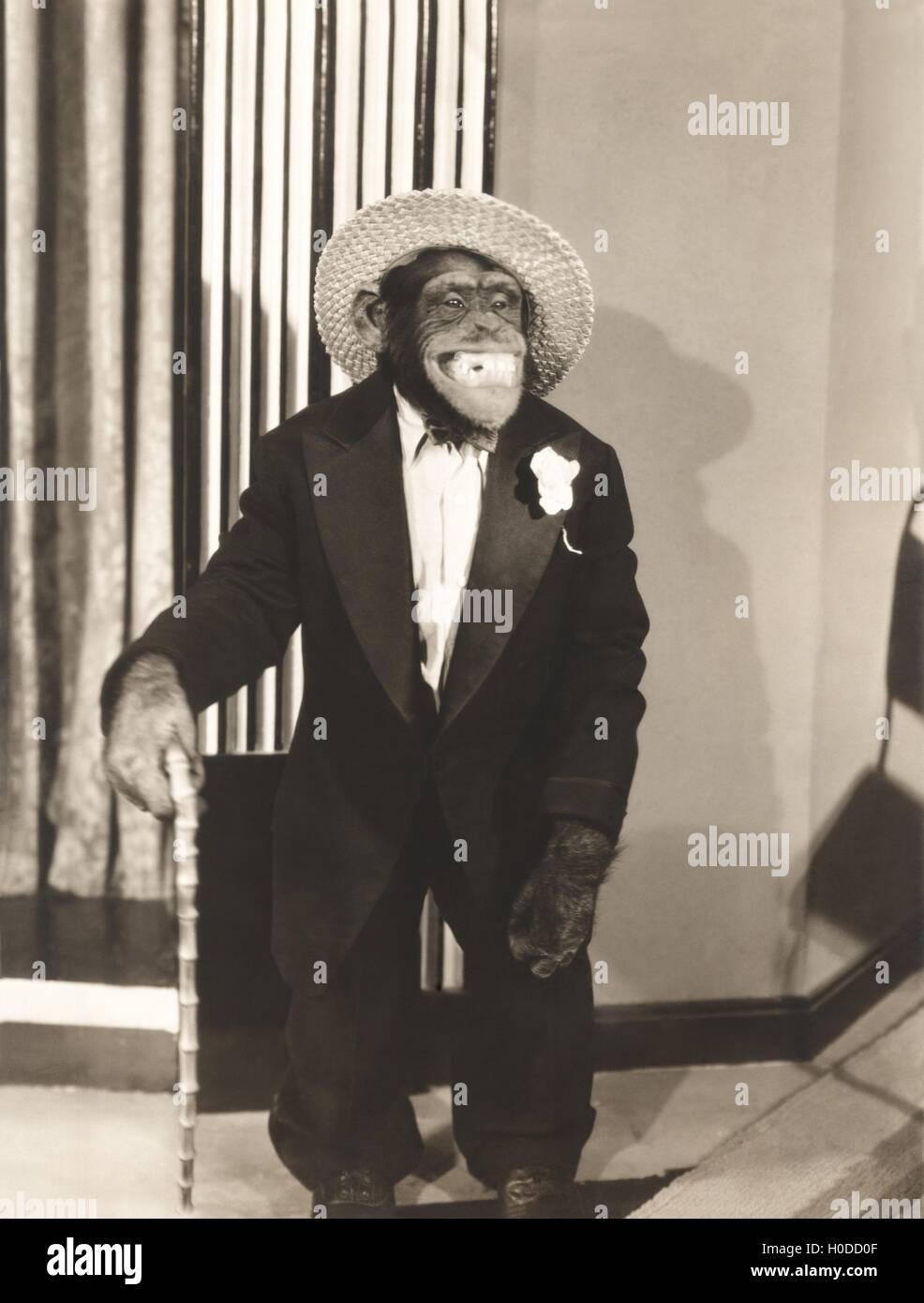 Grinning monkey in tuxedo - Stock Image