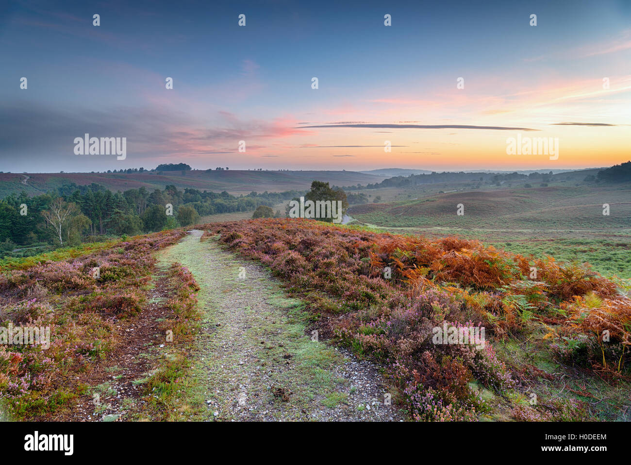 Sunrise over Rockford Common in the New Forest National Park in Hampshire - Stock Image
