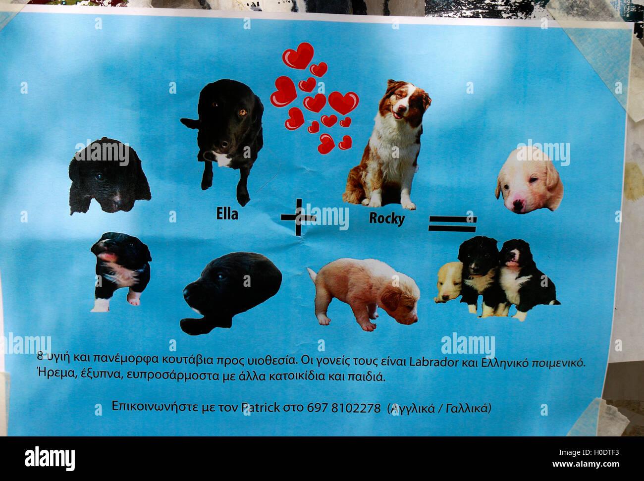 lustiges Inserat fuer Hundewelpen, 5. April 2016, Athen, Griechenland. - Stock Image
