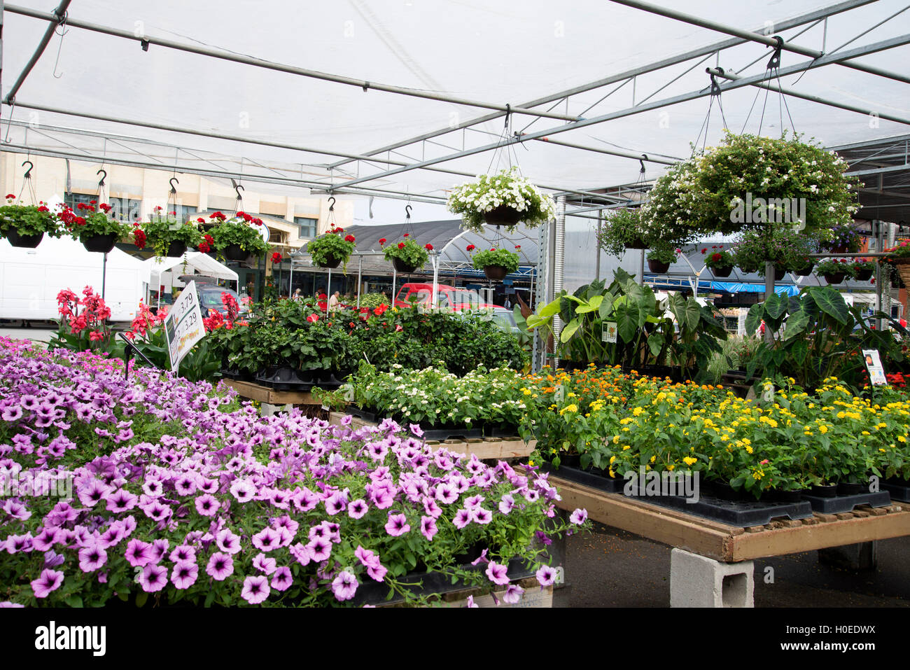 Greenhouse with flowers and plants in Atwater Farmer's Market, Montreral. - Stock Image