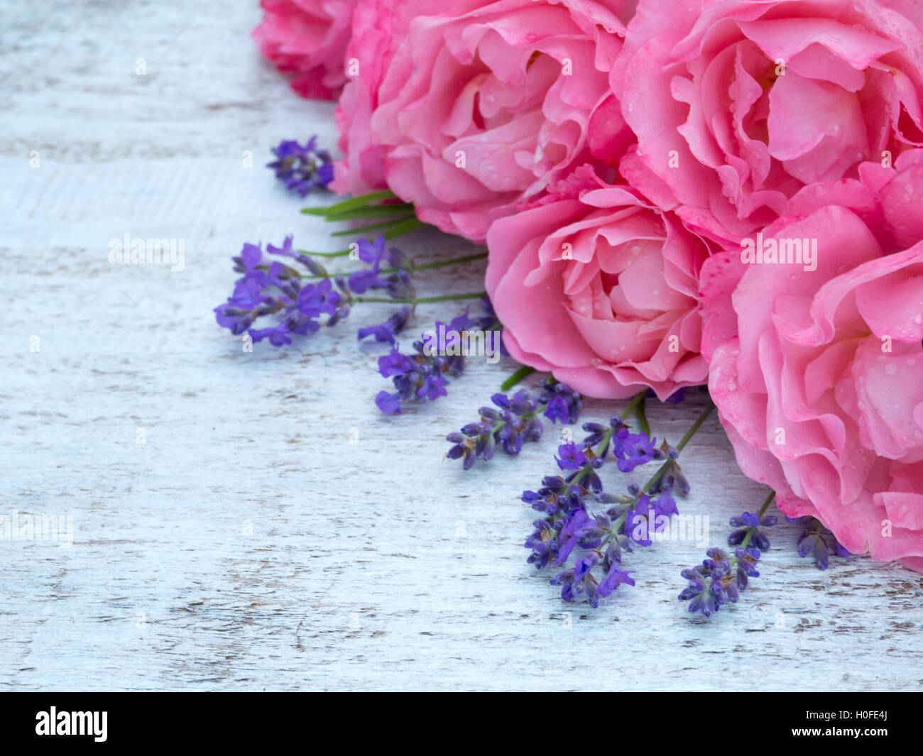 Bright Pink Roses And Lavender Bouquet On The White Painted Rustic