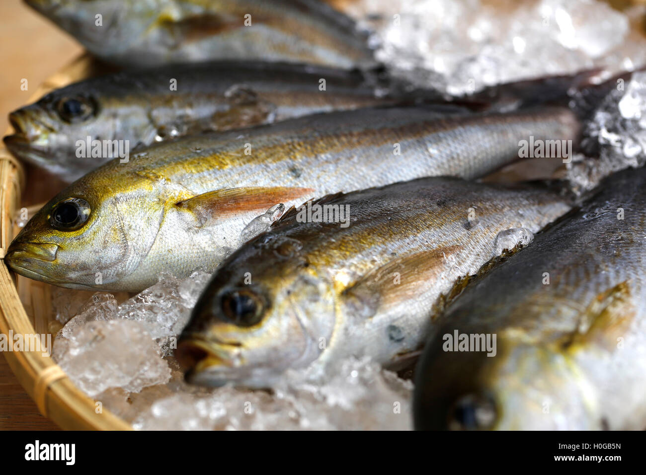 Fresh Chigyo fish caught in the morning on bamboo tray with ice - Stock Image