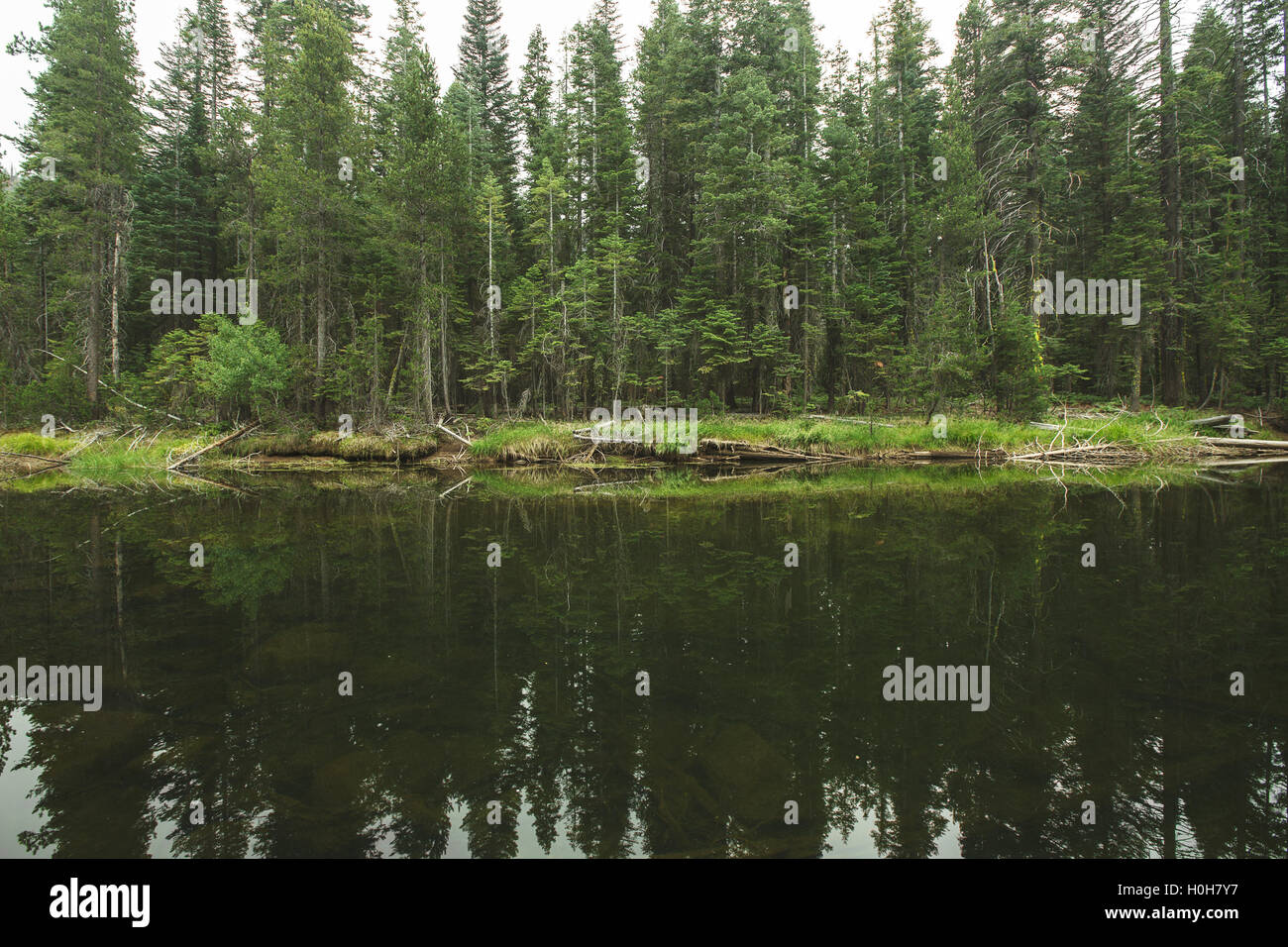 Evergreen trees reflect on the water in California's Yosemite National Park Stock Photo
