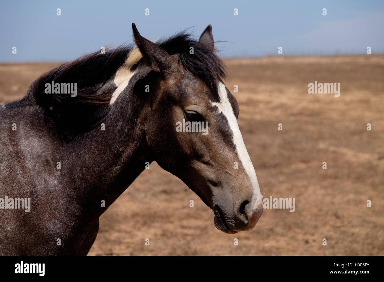 Brown horse on a field - Stock Image