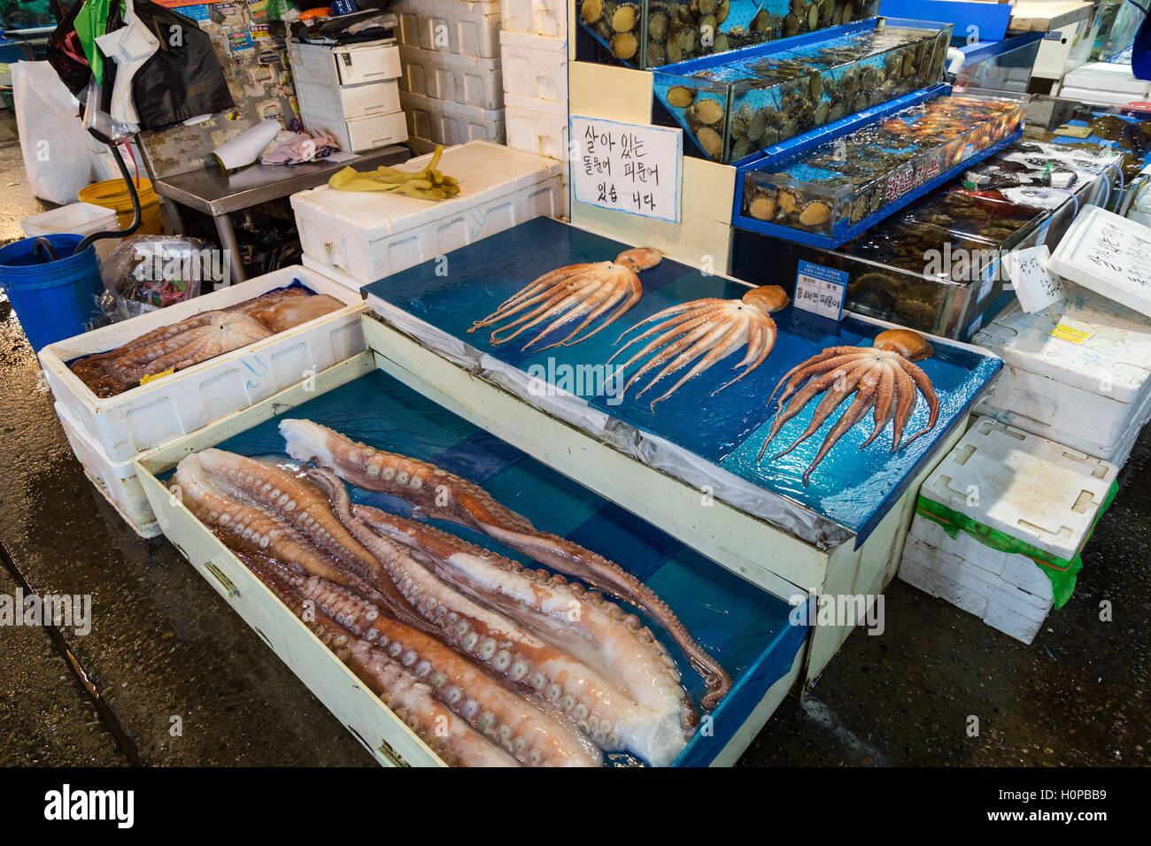 Fresh octopus for sale at the Noryangjin Fisheries Wholesale Market (or Noryangjin Fish Market) in Seoul, South Stock Photo