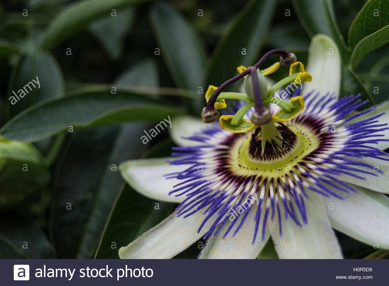 Flower closeup - Stock Image