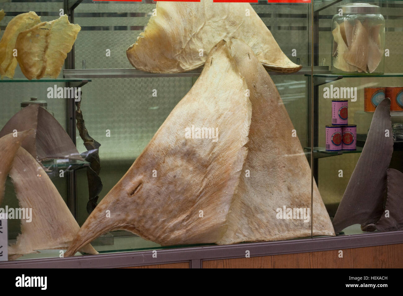 Dried sharks fins showcased in a retailer window with abalone cans (right) and swallows nests (left) on the Hong - Stock Image