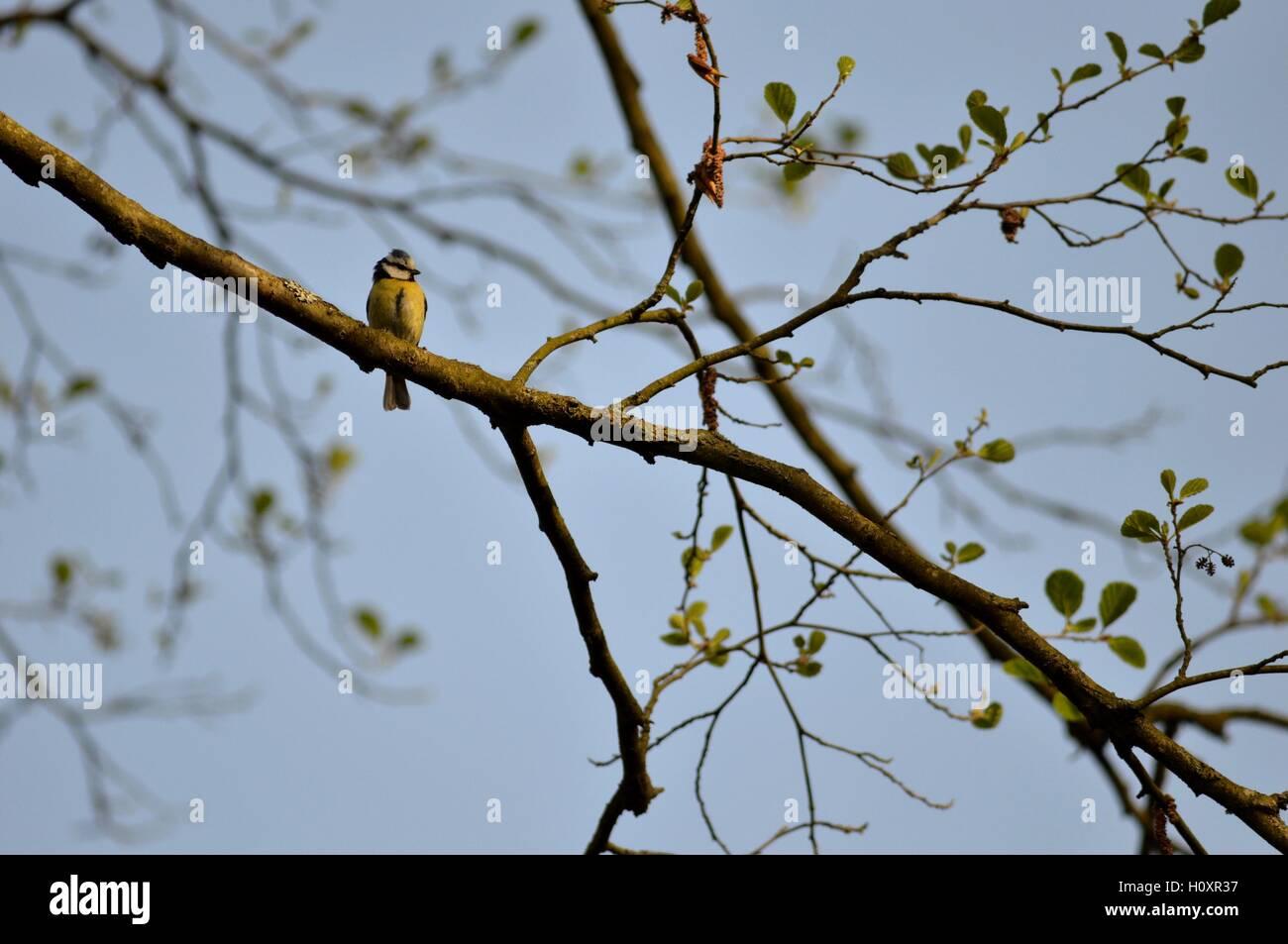 Bird in tree - Stock Image