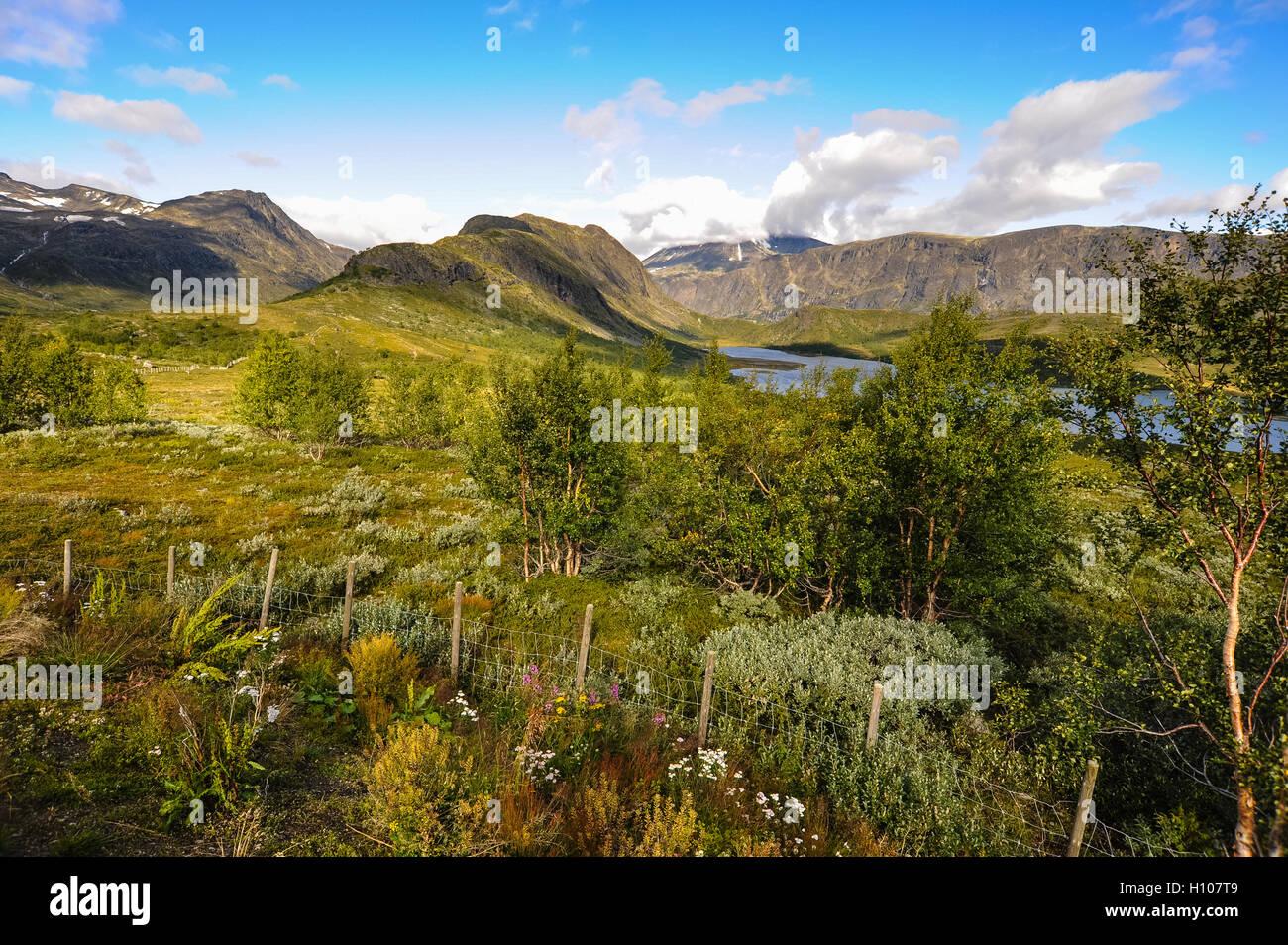 Norway, Oppland, Valdresflya. Just south of the Gjende Lake and Besseggen, in Jotunheimen. - Stock Image