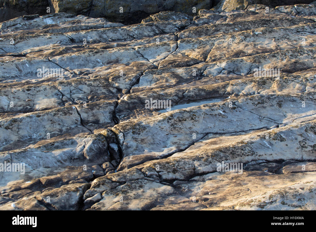Unique Ocean Floor fossil on Flat Holm Island - Stock Image