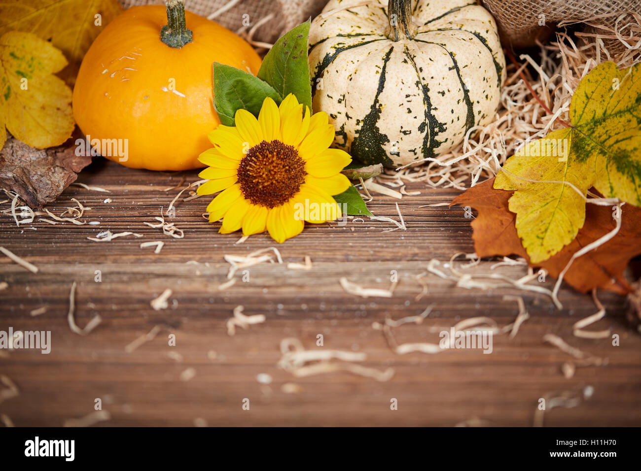 Thanksgiving background with pumpkins, leaves and sunflower on a brown wooden table - Stock Image