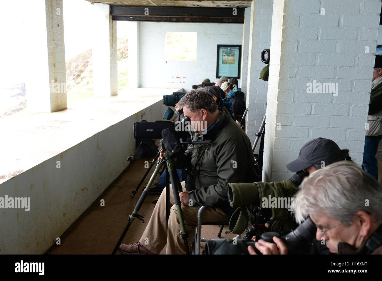 Bird watchers at Strumble Head recording species such as feeding gannets and puffins as well as porpoise and whales - Stock Image