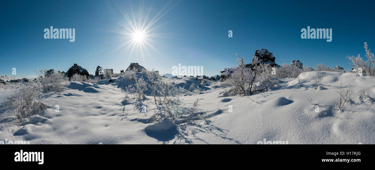 Sun shining on snowy bushes, lava field covered in snow, Krafla volcanic system, Dimmuborgir National Park, Mývatn, - Stock Image