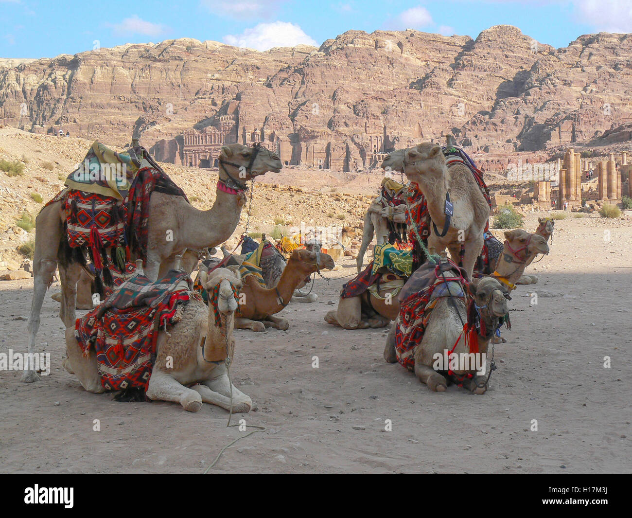 Camels waiting for tourists, Petra in Jordan Stock Photo