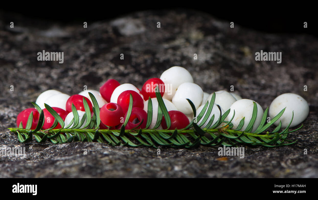 White snowberries and red yew berries arranged on stone. Yew (Taxus baccata) and common snowberry fruits with leaves - Stock Image