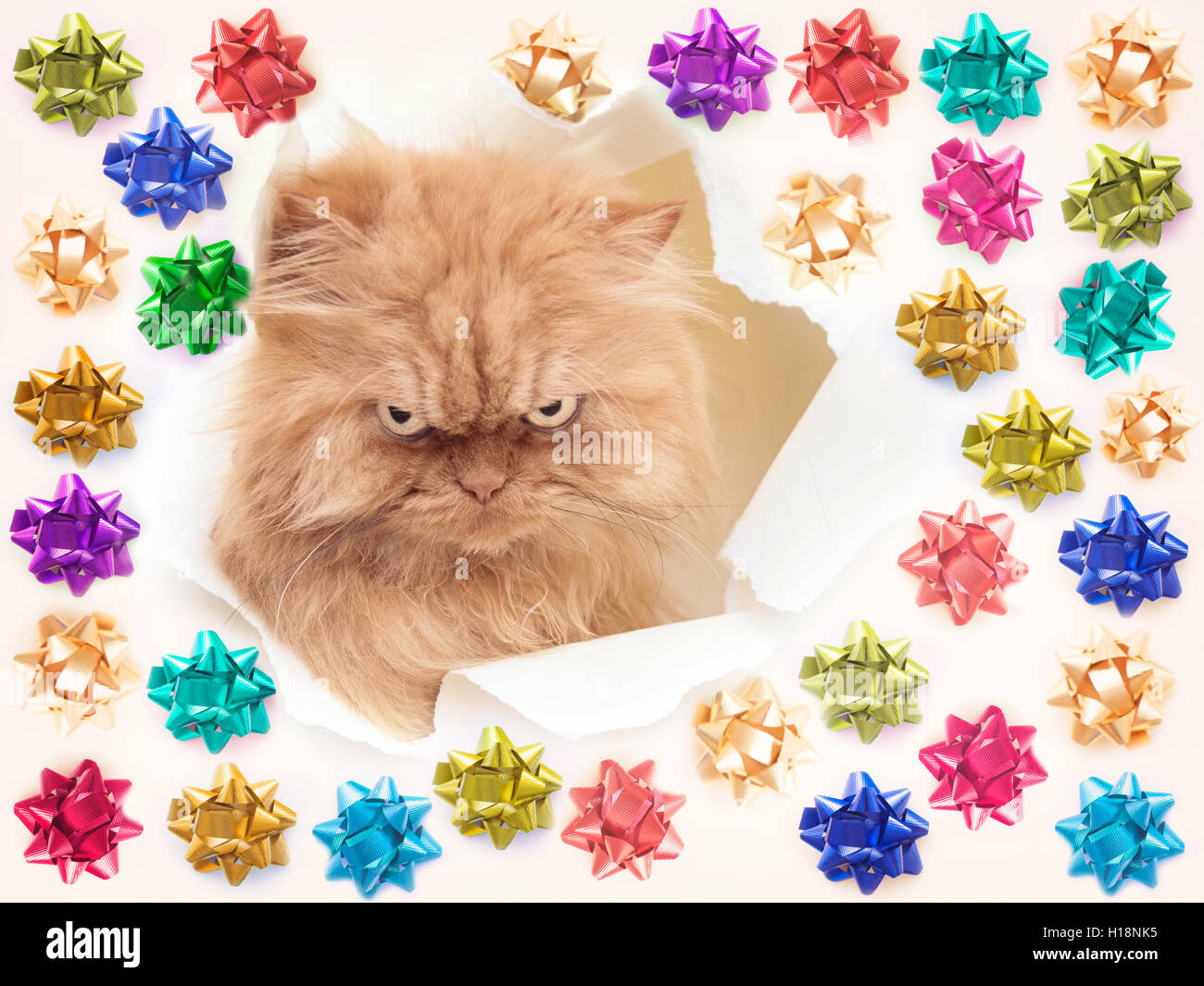 Suspicious Persian cat  looking out from a hole - Stock Image