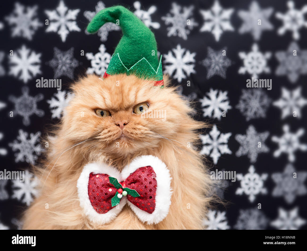 Persian cat wearing holiday elf hat and bow tie - Stock Image