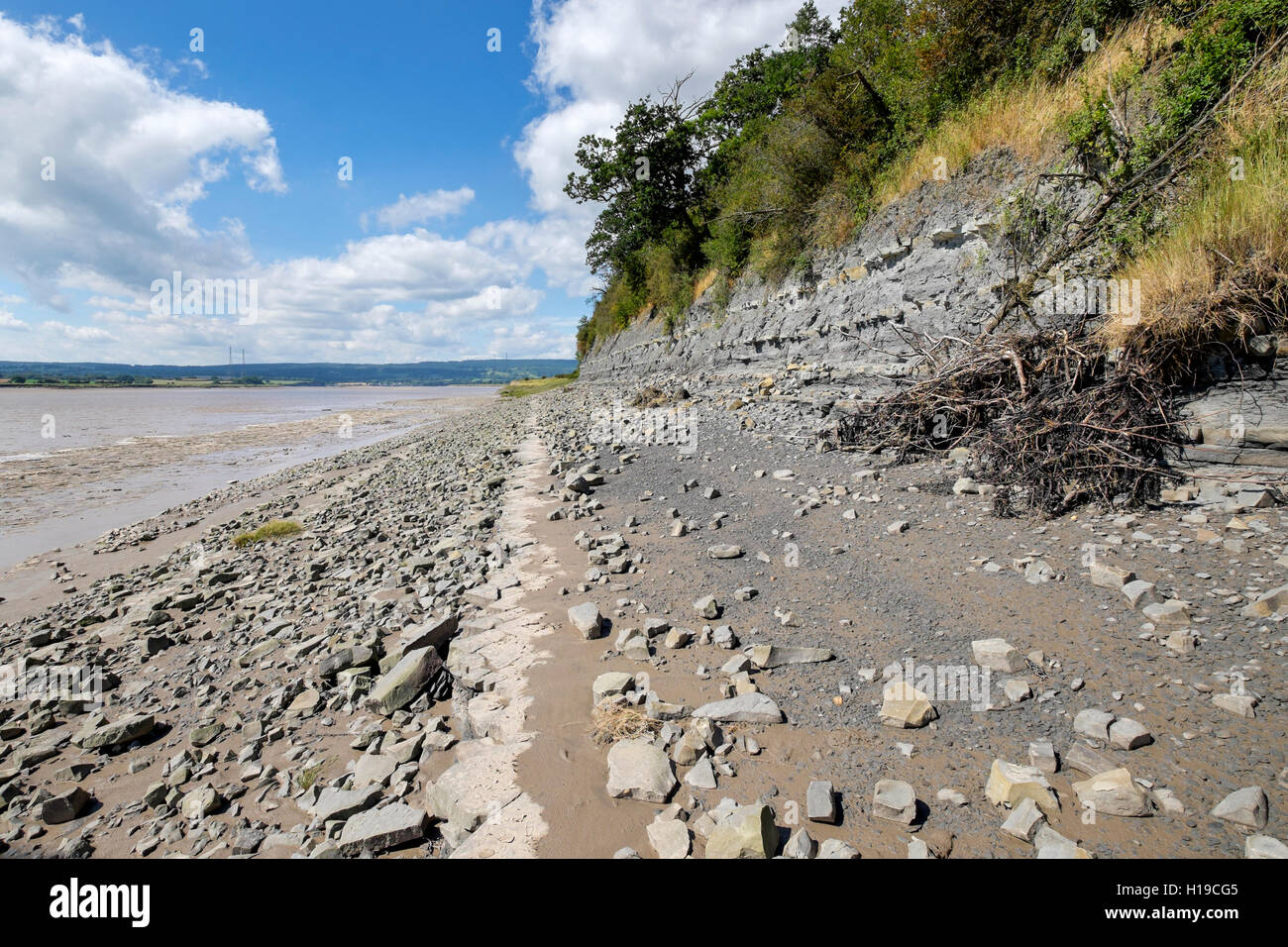 The fossil bearing, early Jurassic blue lias at Hock Cliff on the  river Severn estuary, Fretherne, Gloucestershire, - Stock Image