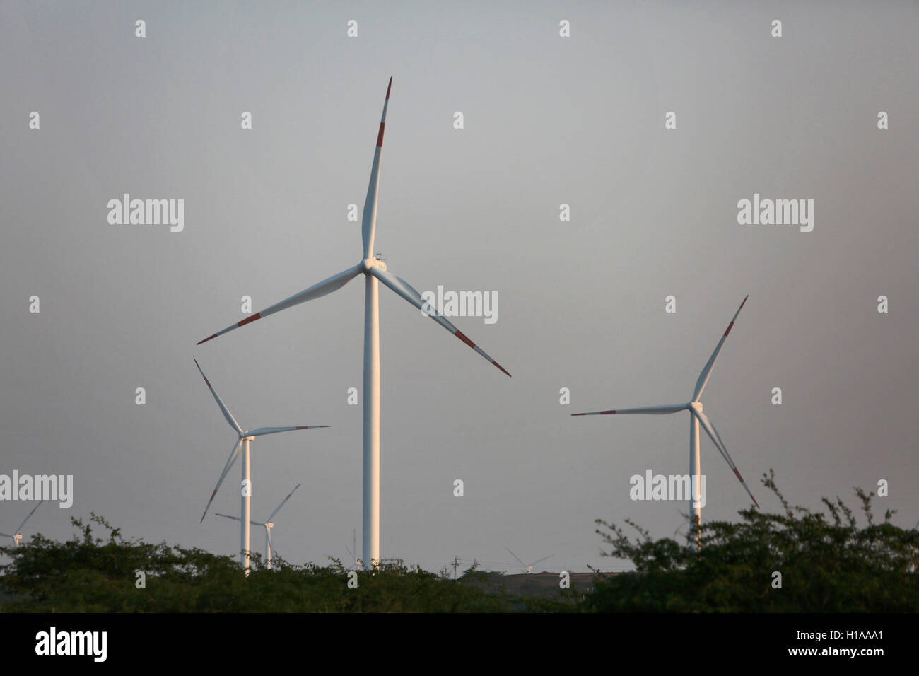Wind Mills, Kutch, Gujarat, India - Stock Image