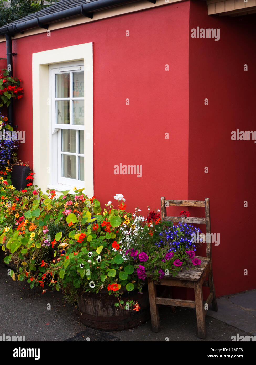 Summer Flowers in Containers outside a House in Tobermory Isle of Mull Argyll and Bute Scotland - Stock Image