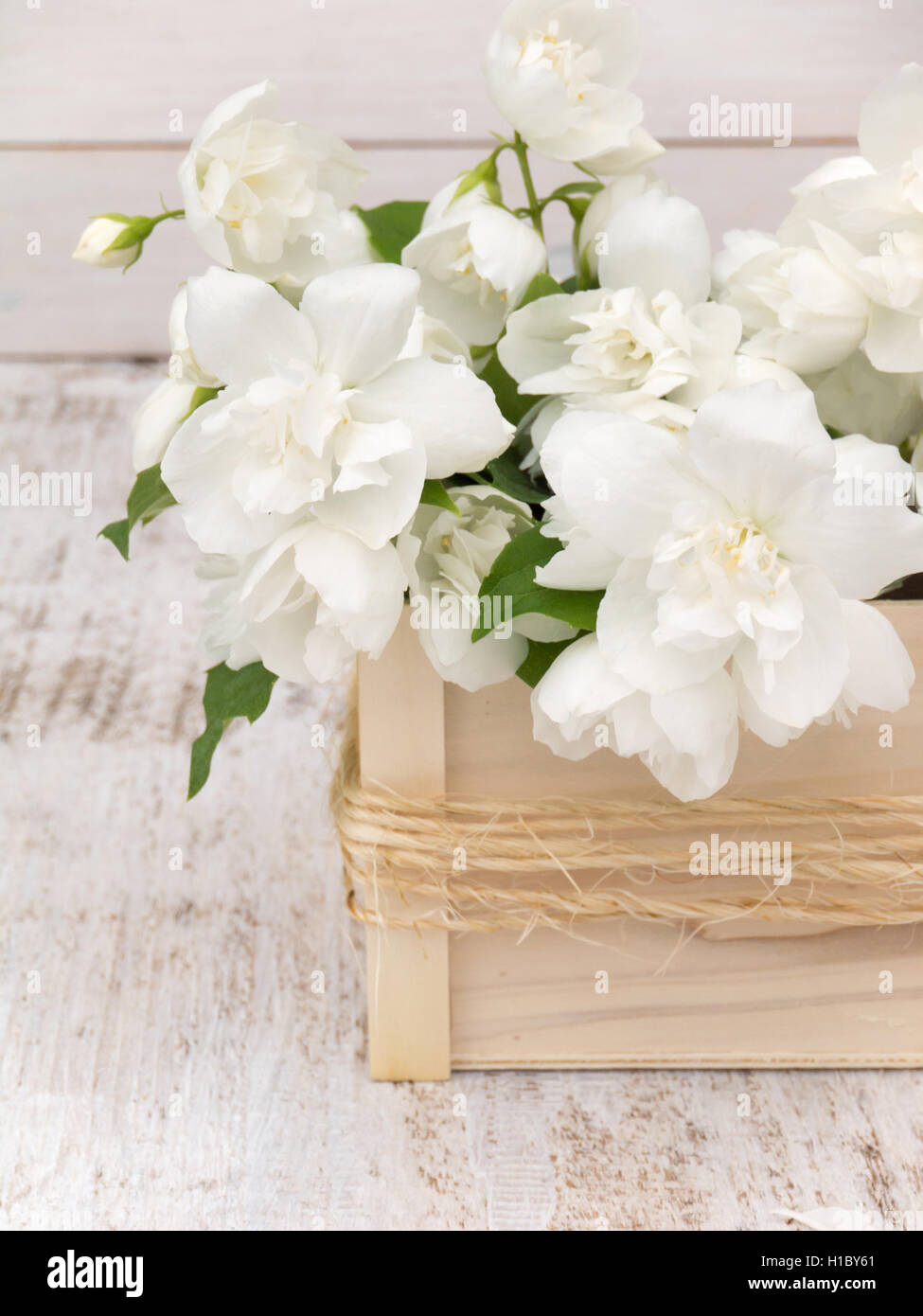 English dogwood bouquet in the wooden box on the white painted rough english dogwood bouquet in the wooden box on the white painted rough background izmirmasajfo