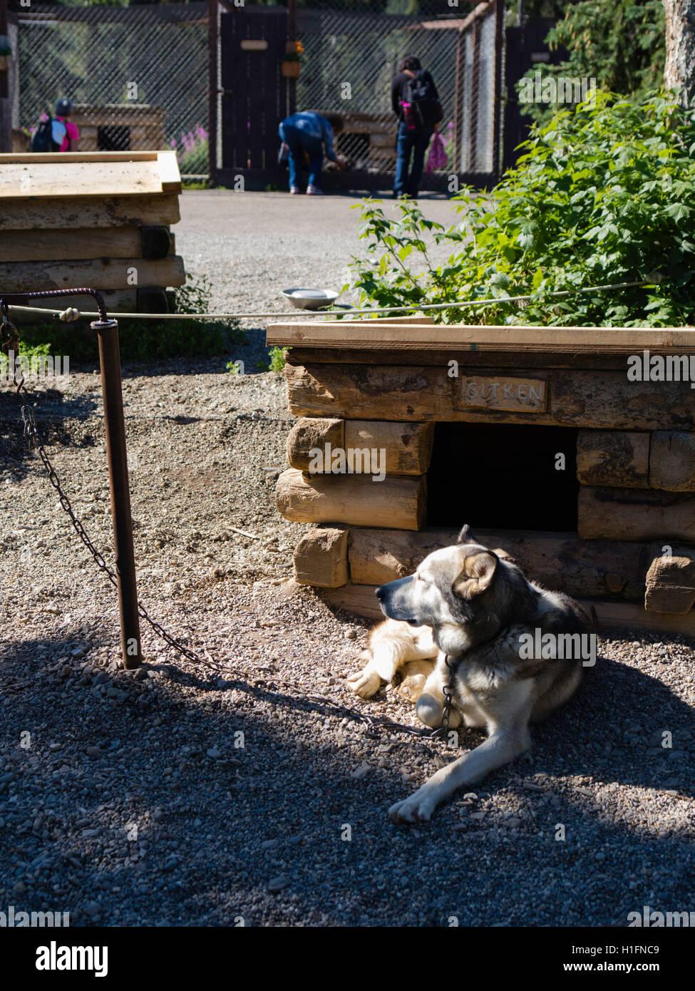 Sled Dog Adventures - YouTube
