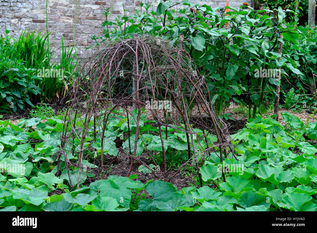 climbing support made of branches - Stock Image