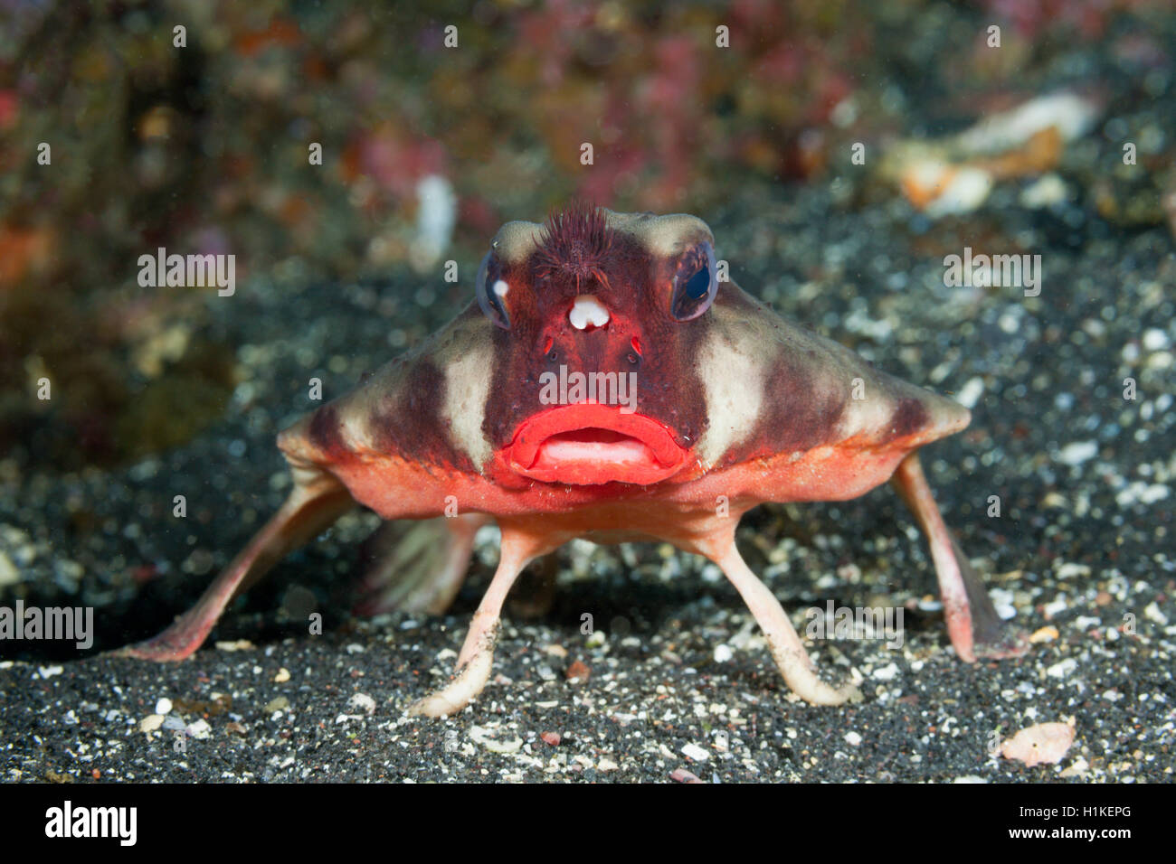 Fish Lips Stock Photos & Fish Lips Stock Images - Alamy