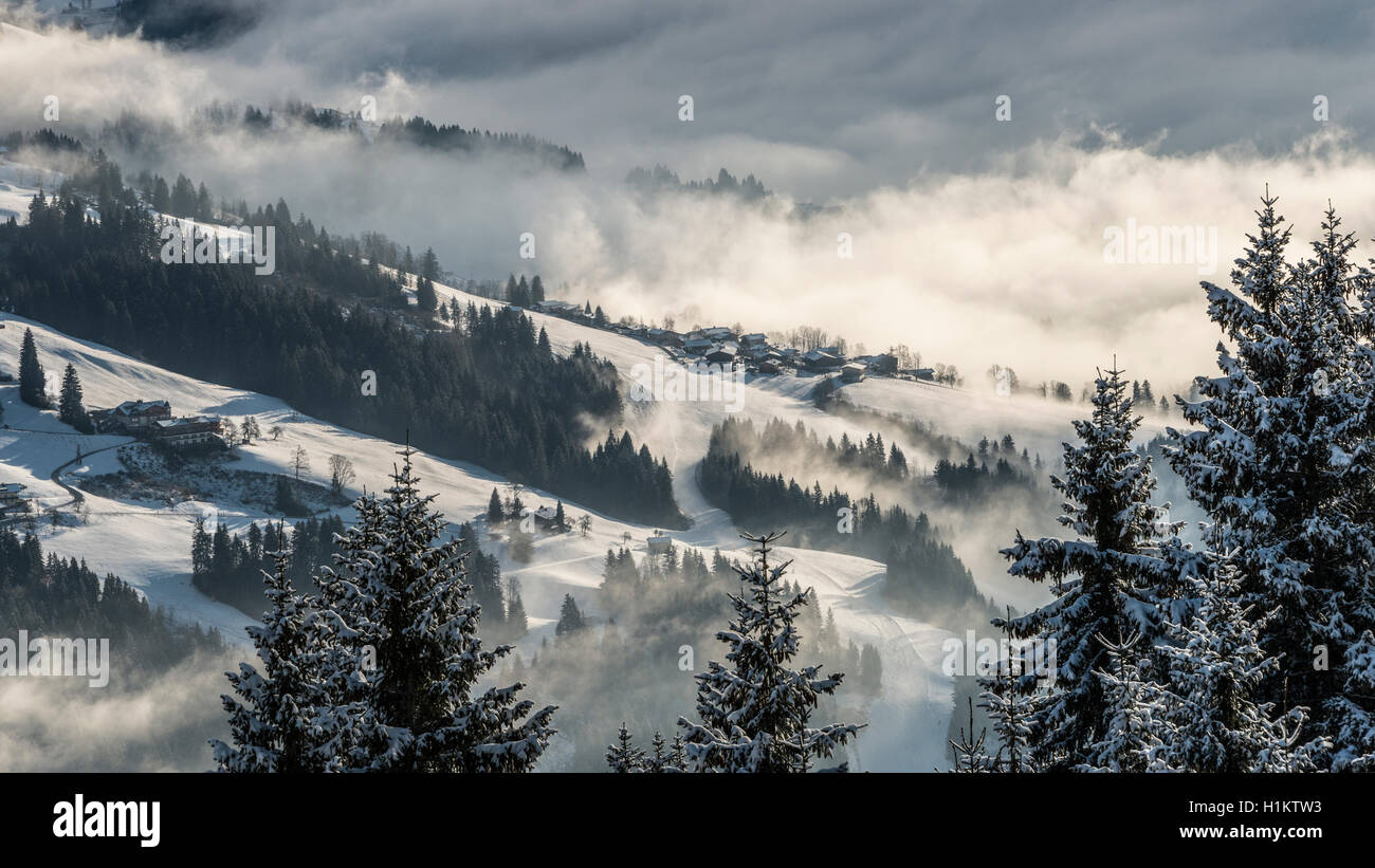 Winter landscape in Brixental, conifers, snow and fog, Brixen im Thale, Tyrol, Austria - Stock Image