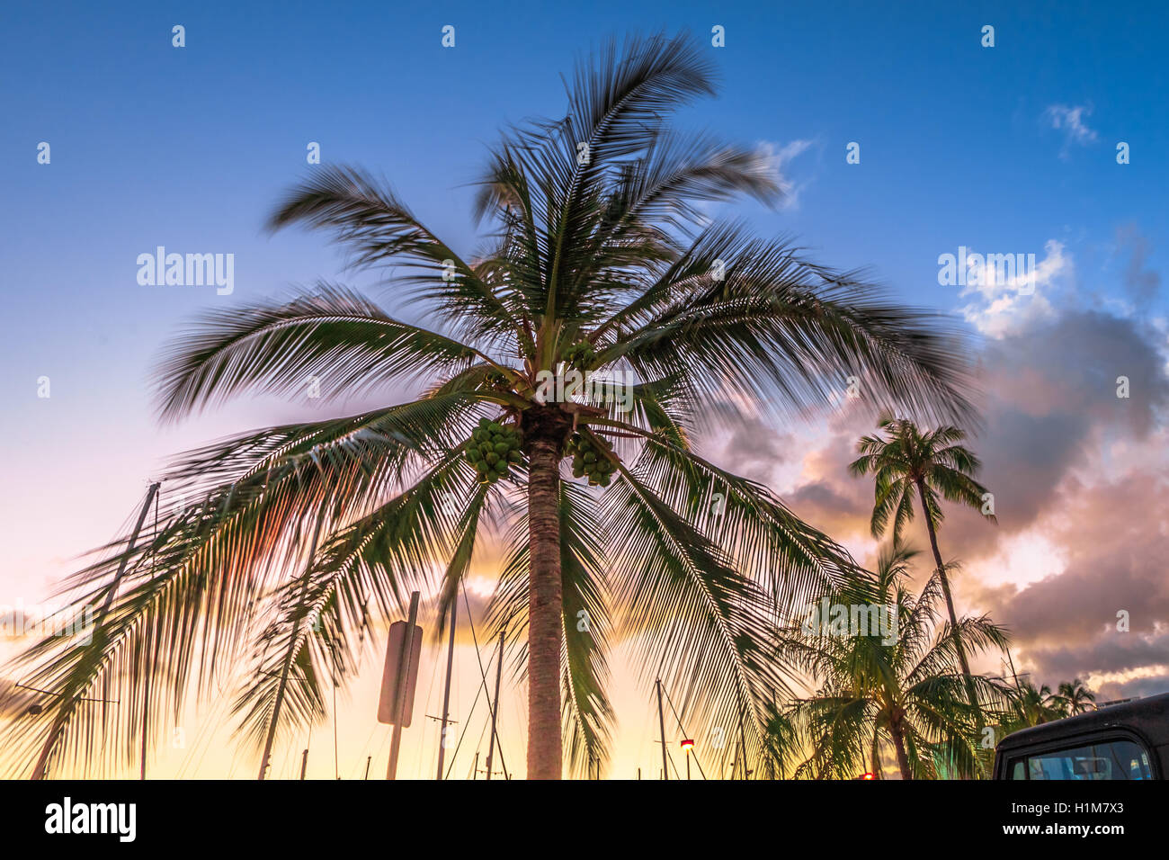 Coconut palm trees - Stock Image