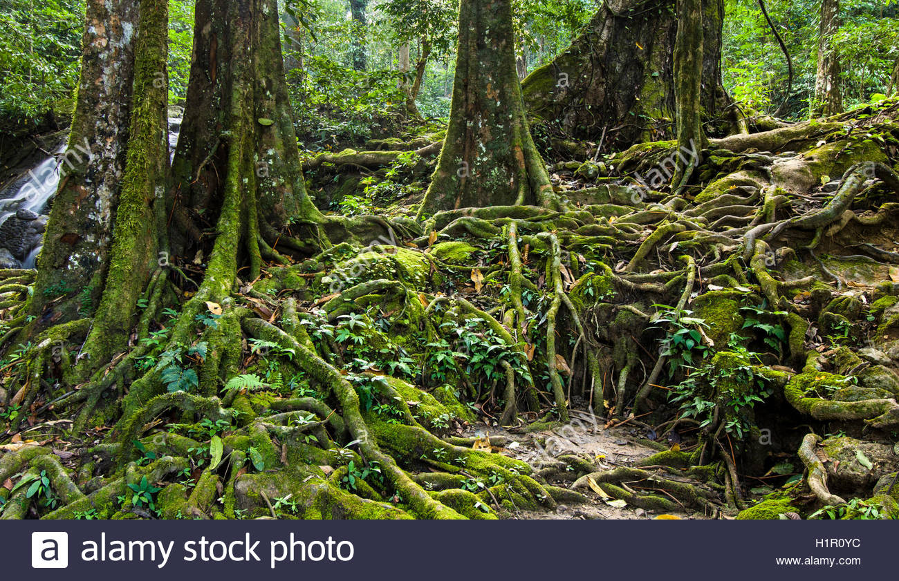 Tangled Jungle High Resolution Stock Photography And Images Alamy
