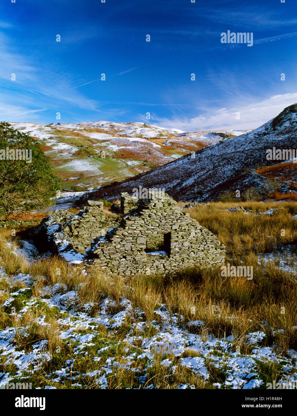 One of over a dozen abandoned and ruined farmsteads in the Mwyro Valley, a remote but once populated & well - Stock Image
