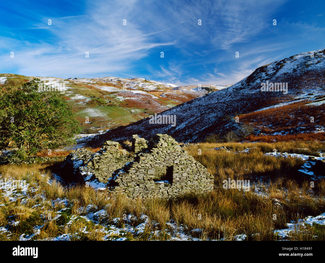 One of over a dozen abandoned and ruined farmsteads in the Mwyro Valley, Ceredigion, a remote but once populated - Stock Image