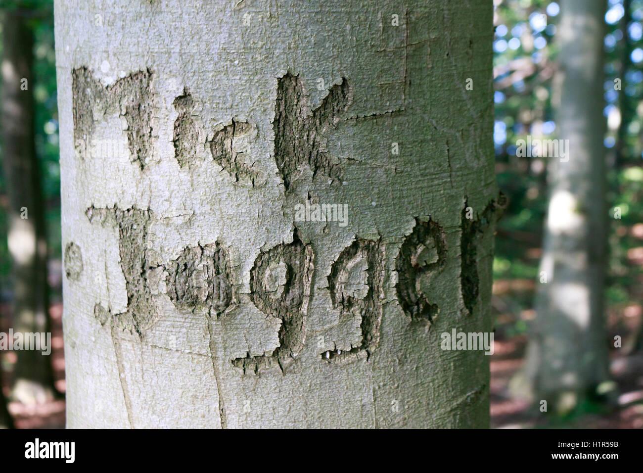 'Mick Jagger' in Baum eingeritzt, Ruegen. - Stock Image