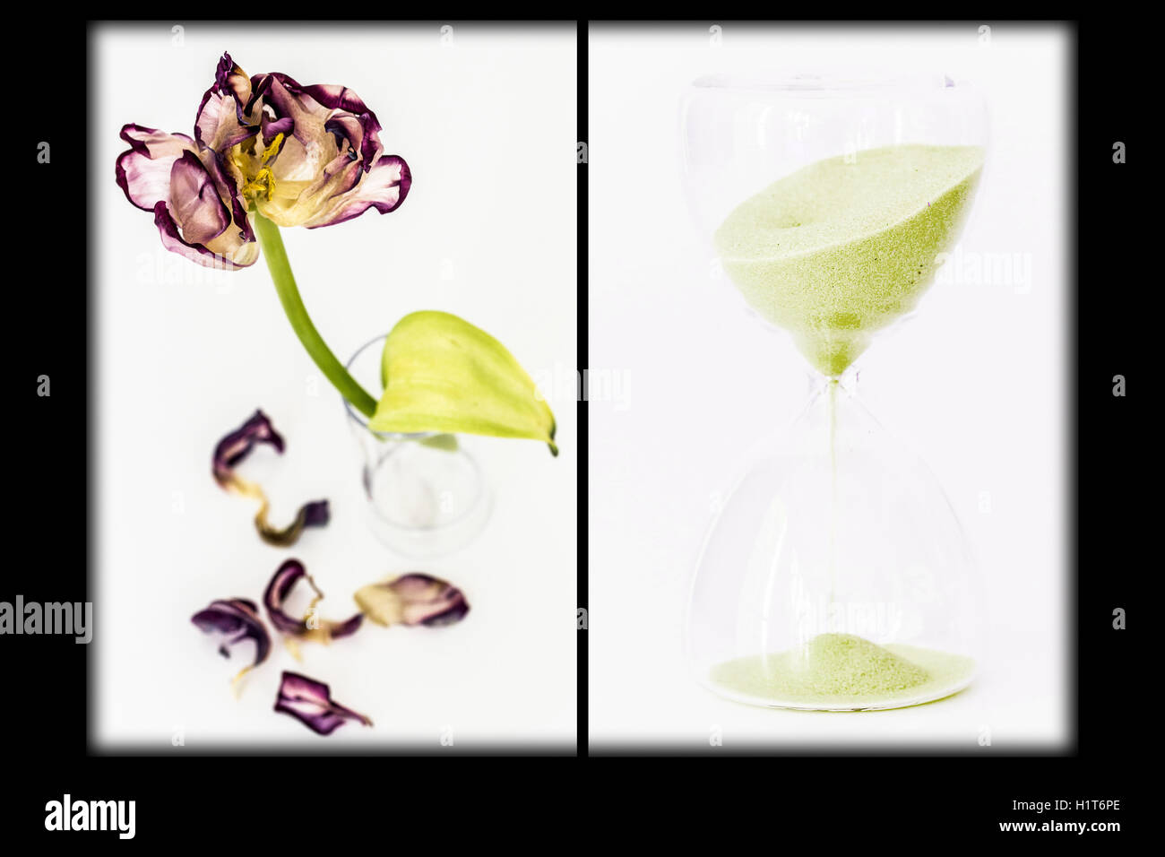 Composite image of an hourglass and a wilted flower. conceptual image of aging. - Stock Image