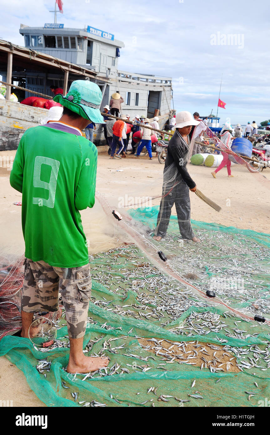 Quang Ngai, Vietnam - July 31, 2012: Fishermen are removing anchovies fish from their nets to start a new working - Stock Image
