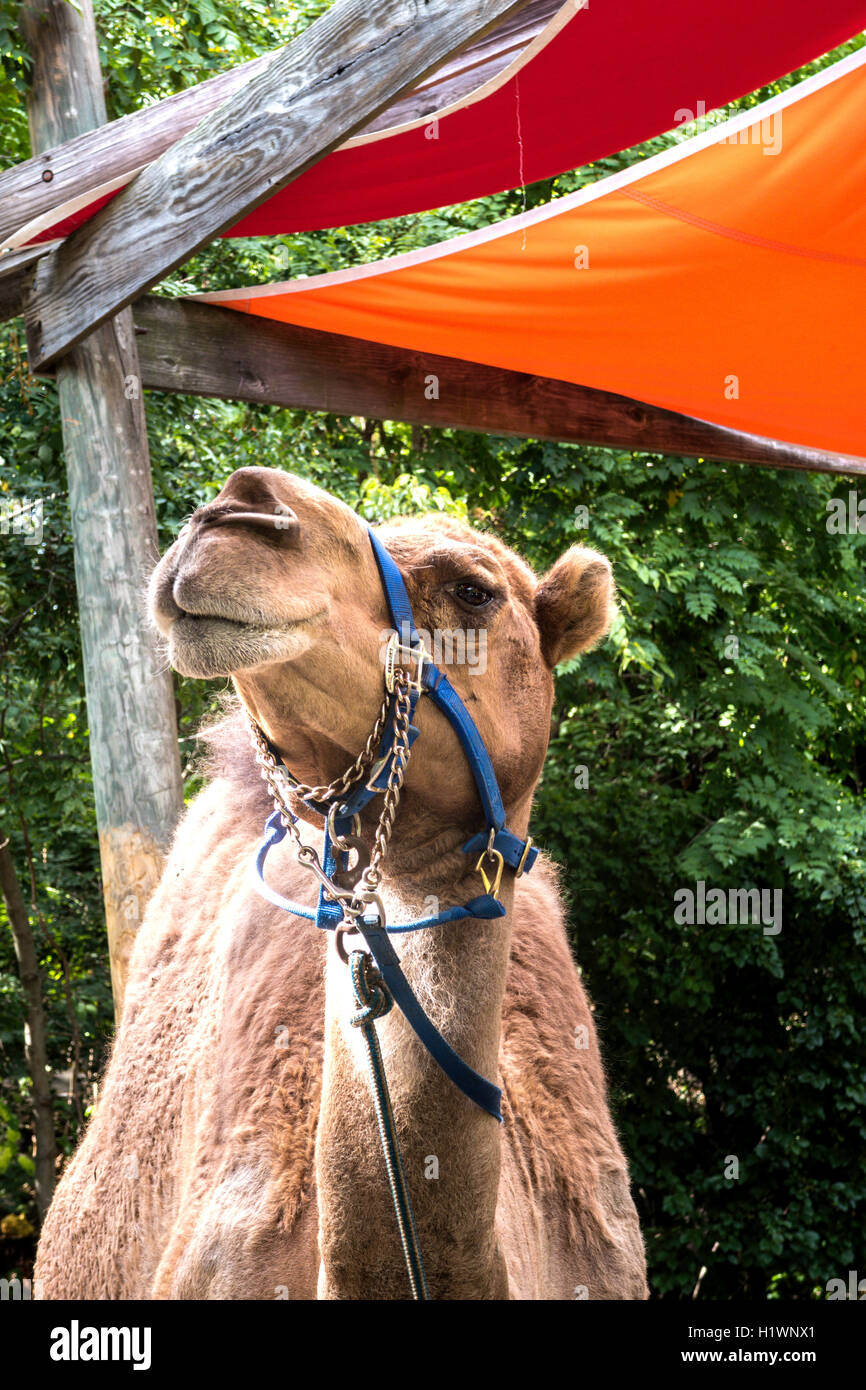 Camel Bronx Zoo Wildlife Conservation Stock Photos Camel Bronx Zoo