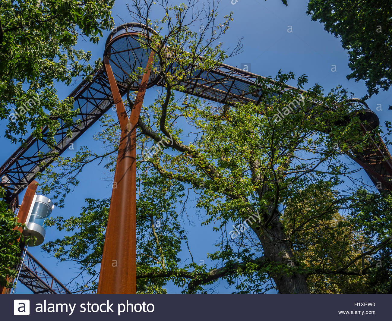 Kew Gardens Tree Top Walk Way Birds eye view of the canopy 18 metres high Oak Lime Chesnut trees looking up - Stock Image