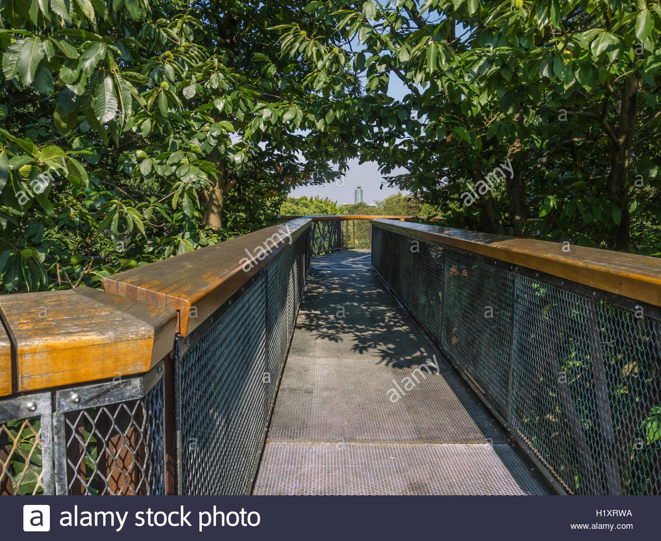 Kew Gardens Tree Top Walk Way Birds eye view of the canopy 18 metres high Oak Lime Chesnut trees Tower Block - Stock Image