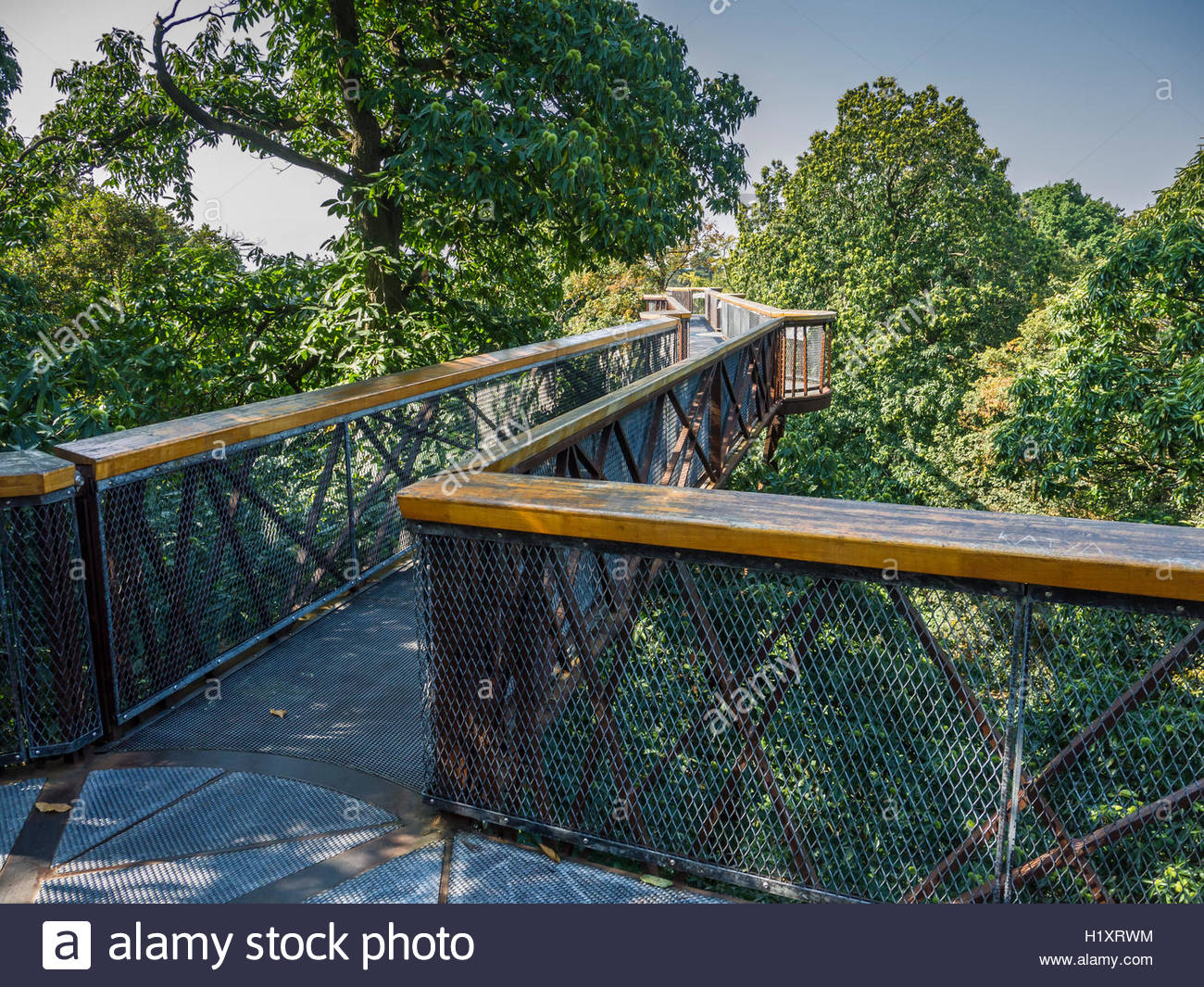 Kew Gardens Tree Top Walk Way Birds eye view of the canopy 18 metres high Oak Lime Chesnut trees - Stock Image