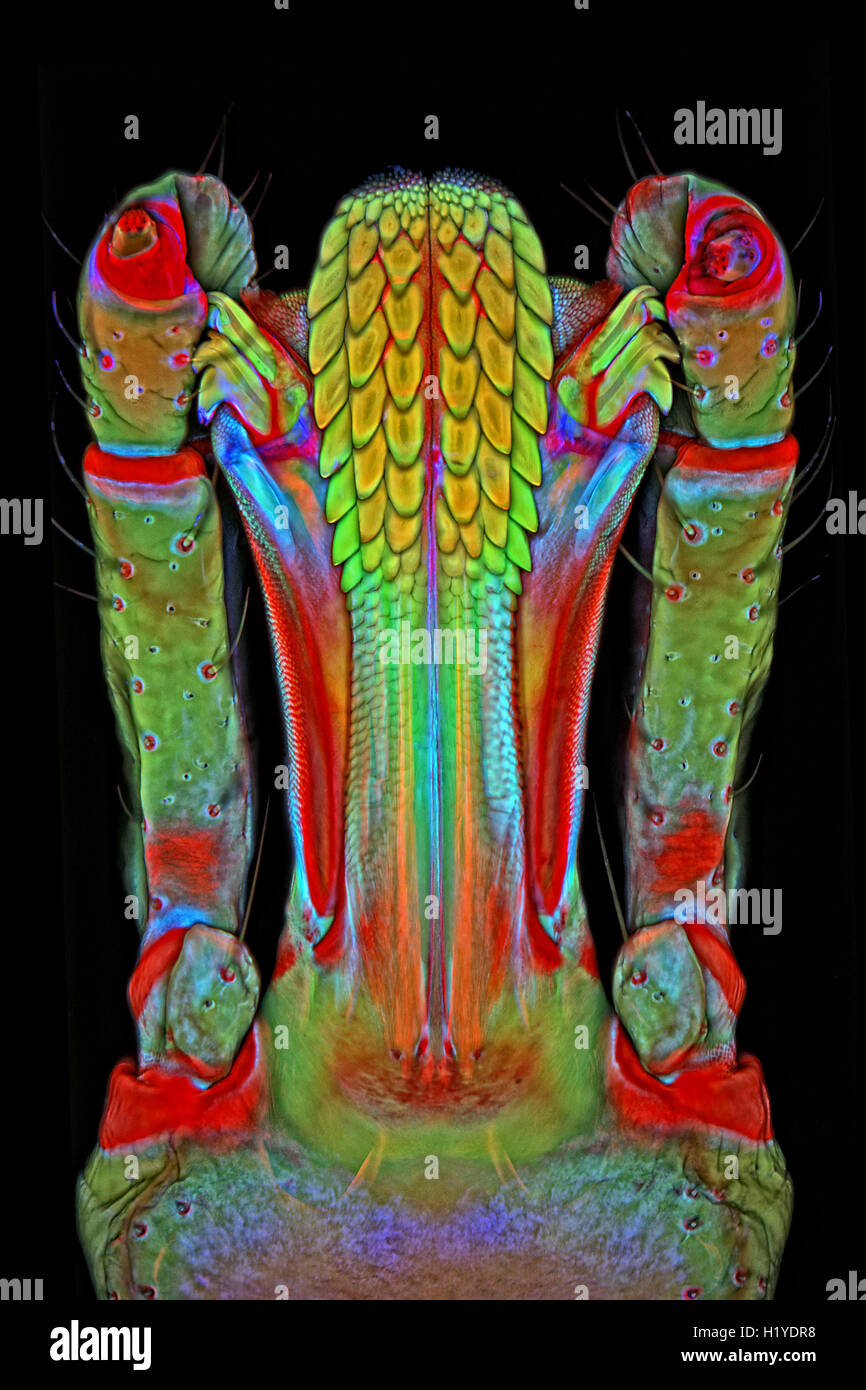 The mouth parts of a lone star tick are revealed in vivid detail ...
