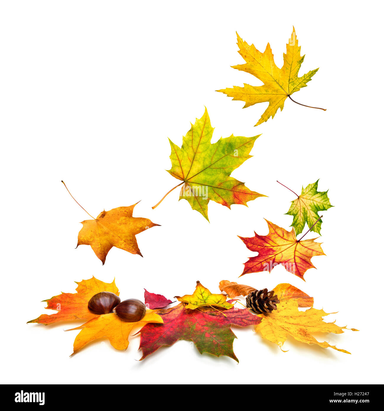 Isolated multi-colored autumn leaves gently falling down, with white copy space - Stock Image