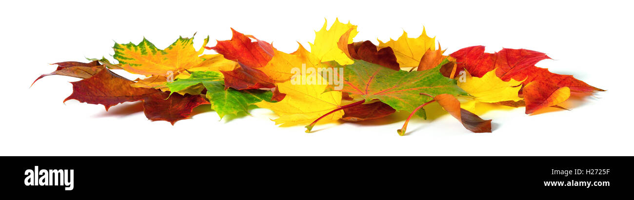 Fallen down autumn leaves in vivid colors, studio isolated on white background Stock Photo