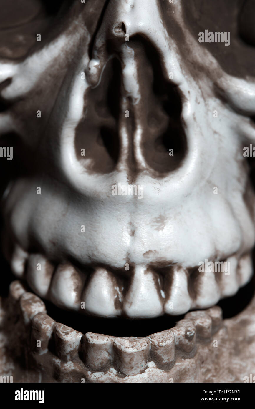 Close-up vertical photo of the human skull Stock Photo