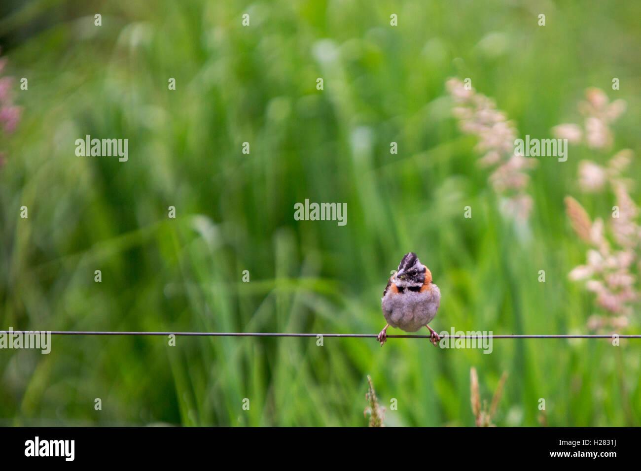 tiny bird on a wire Stock Photo
