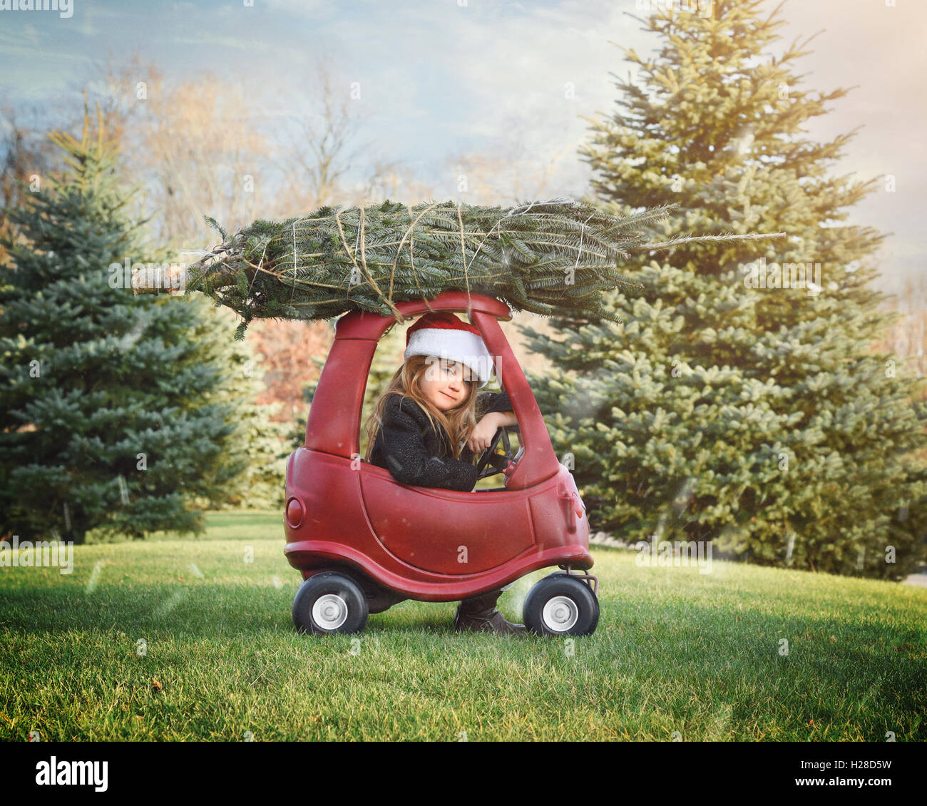 A girl is bringing home a christmas tree on top of a roof outside in the snow for a holiday decoration or family - Stock Image