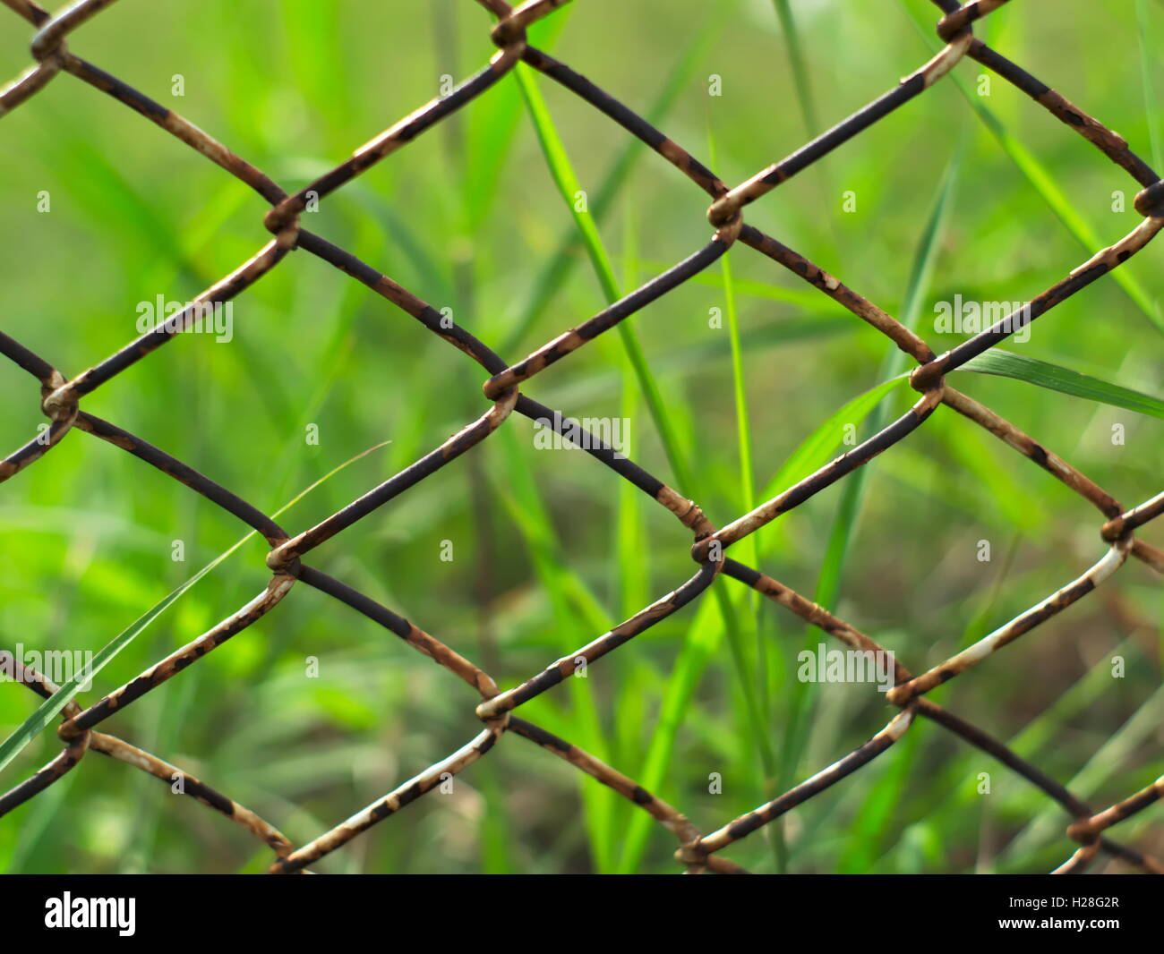 rusty metal chain wire fence with grasses in the background - Stock Image