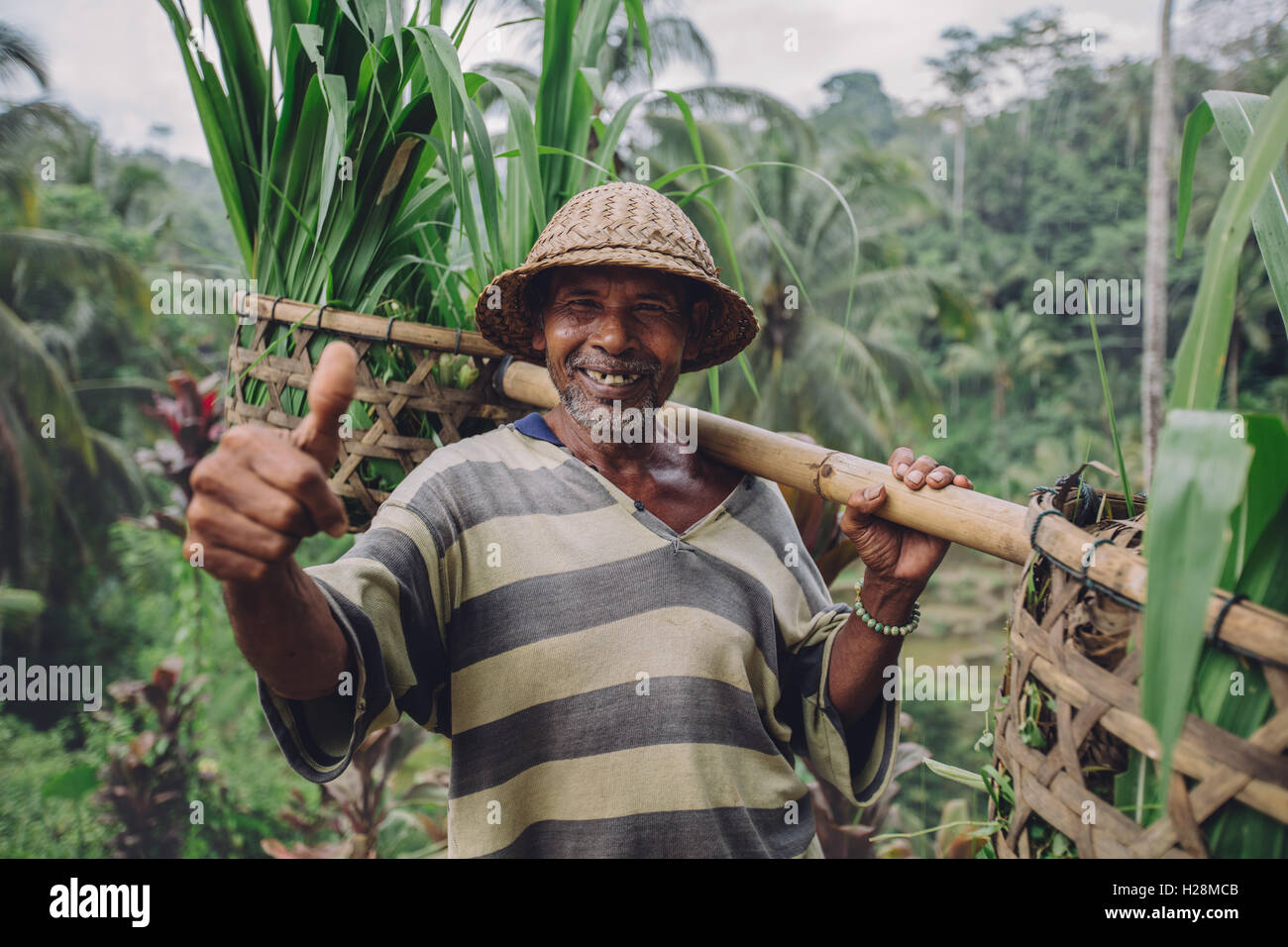 Shot of happy senior farmer giving thumbs up. Senior man smiling and carrying a yoke on his shoulders with seedlings. - Stock Image